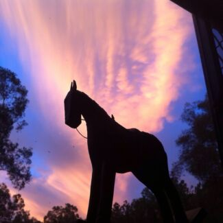 EQUUS PARK QLD... ADULT RIDERS (own horse) $30 (our horse) $50