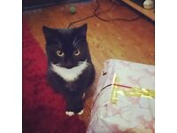 ********MISSING BLACK AND WHITE CAT************************************