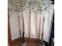 White cherry blossom tree's cement bases pots won't blow