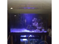 Marine fish tank full set up may break