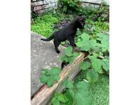 Kitten (last one)