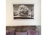 LARGE Central Park Tree Picture