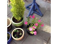 Garden pots/plants