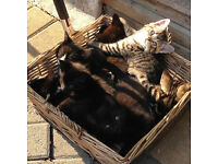 Six lovely kittens looking for home