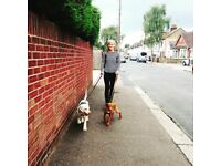 Deluxe doggie daycare / dog walks / homestays