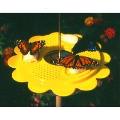 Butterfly Feeder 12 Ounce With Ant Moat Butterflies