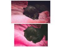 Cat & kitten for rehome
