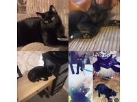 Missing black boy cat/kitten 8months old