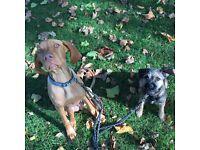 London Doggies Daycare