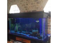 Fish Tank and fish setup