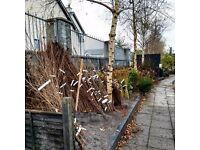 Hedging Plants for sale - quality bare root stock. From 59p. Delivery throughout Northern Ireland!