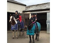 14h pony for part loan