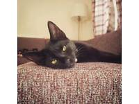 7 month old black kitten