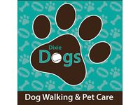 Dixie Dogs - Dog Walking Western Edinburgh