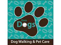 Dixie Dogs - Dog Walking Western Edinburgh