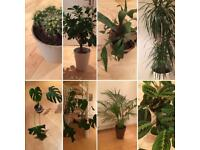 Plants & pots - prefer to sell as collection