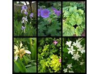 Various garden flower plants from 1 pound