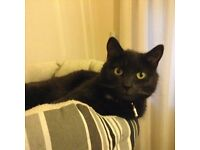 Cat wanting quiet loving home only