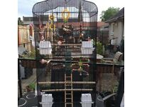 Extra large bird cage and lots accessories