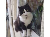 Missing our beloved cat from 20/12/17 from Easton,Bristol -Lansdown Rd area