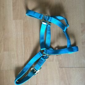 Blue Cob head collar