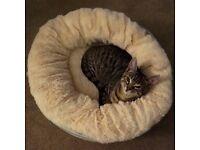 Small Soft Doughnut Cat/Dog Bed