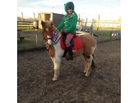Fab, sweet 12.2 pony looking for horsey family home