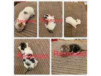 5 x male kittens