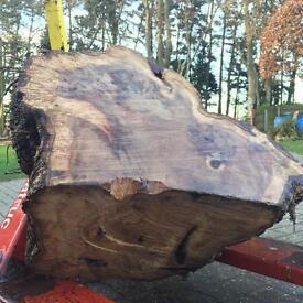 Large English Oak Burr For Woodturning Wood Turning