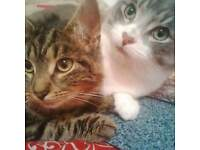FREE 2 TwoY/Old Cats(Boy&Girl).
