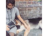 Italian girl and her Friendly dog looking for a room close to gunnersbury