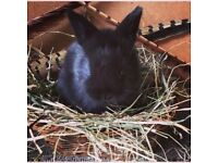 Baby Rabbit Kits for Sale