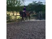 🌟 Part Share Available - Lovely 16hh Mare, Penicuik 🌟