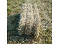 good quality conventional hay bales