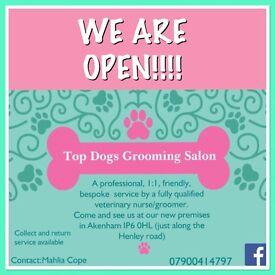 ⭐️Top Dogs grooming salon, new premises ⭐️
