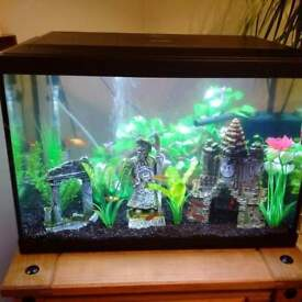 Tropical Glass Fish tank set up for sale - Includes fish
