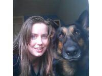 Roysten Dog Walking Services / Dog Walker