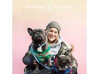 Wimbledon Merton Dogwalker and Dogsitter