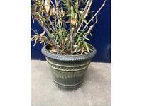 Large Ceramic Pale Green Plant Pot