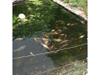 Pond of assorted fish