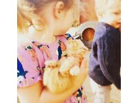 5 Gorgeous Kittens - well handled and loved
