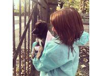 Dog walker/ Pet Carer