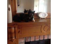 30.1.17 Missing Cat, in Lowwood Gardens, North Belfast area