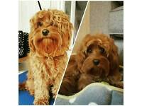 Doodle-do Mobile Dog grooming
