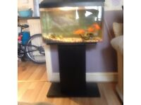 Fish tank and stand for sale and 3 fish.
