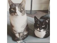 Cats need a new home (Can be separated)
