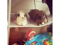 Male And female rabbit pair