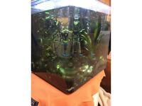 Aqua one tropical glass fish tank/ fish whole set up