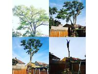 Fully insured and experienced tree surgeons