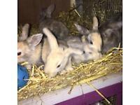Bunnies , baby rabbit